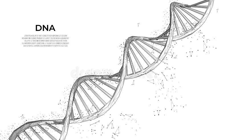 Dna polygonal DNAmolekyl för wireframe 3d Medicinsk vetenskap, genetisk bioteknik, teknologi för kemibiologiinnovation royaltyfri illustrationer