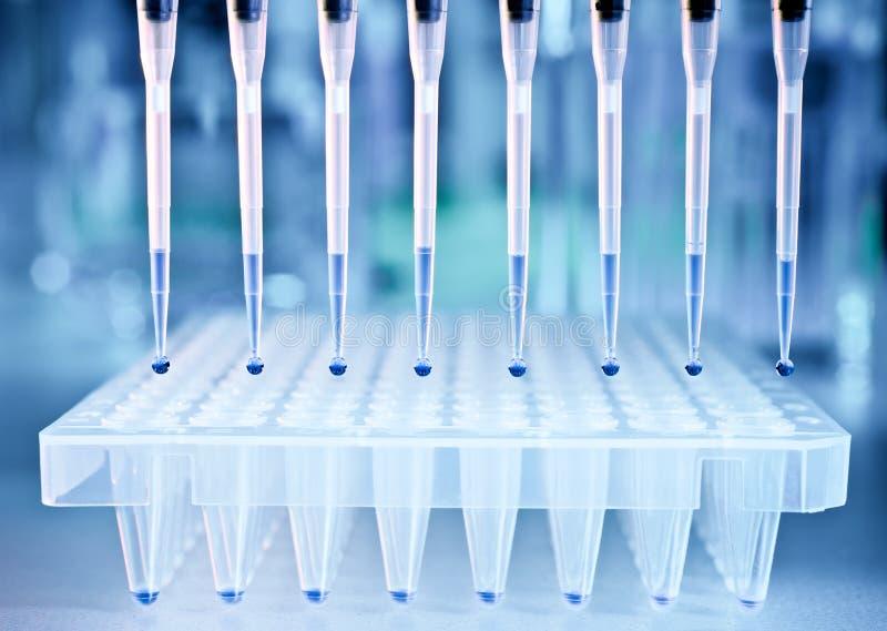 DNA próbki i talerz dla PCR analizy zdjęcia stock