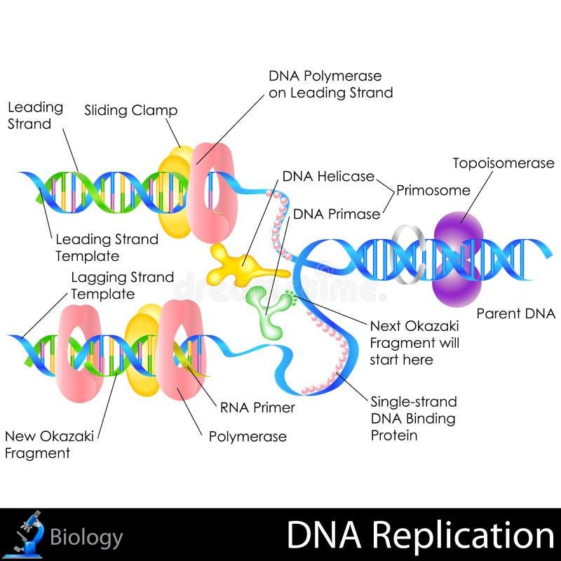 DNA replikacja royalty ilustracja
