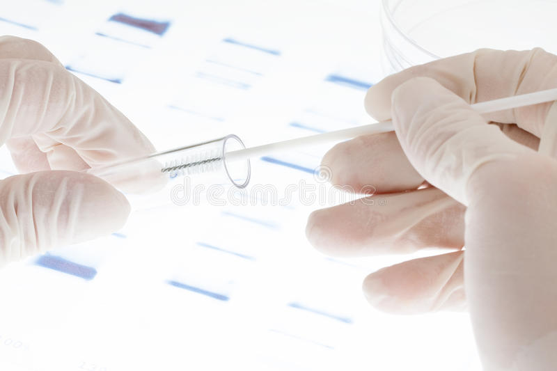 DNA sample. Researcher putting sample of DNA test into a test tube royalty free stock image