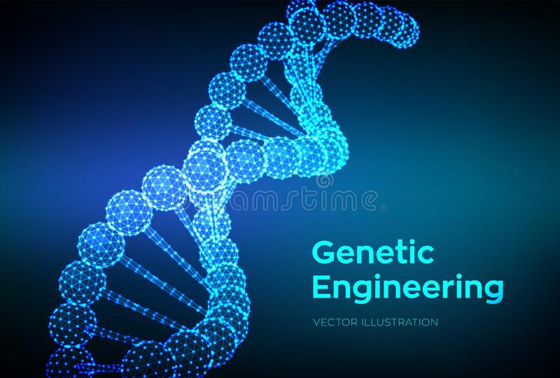 DNA sequence. Wireframe DNA molecules structure mesh. DNA code editable template. Science and Technology concept. Vector. Illustration royalty free illustration