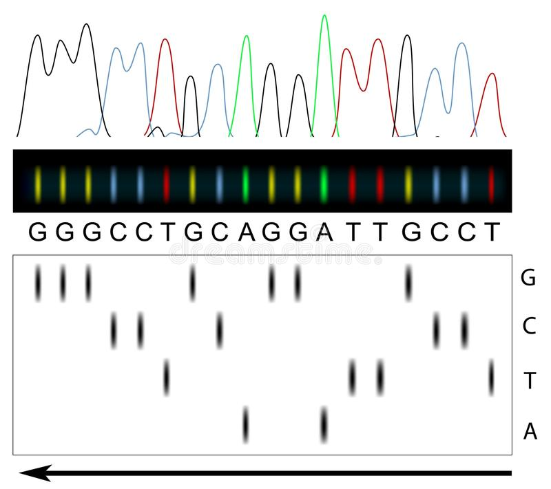 DNA sequencing. Principle and example, eps8 royalty free illustration