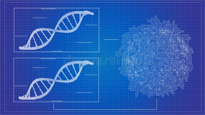 DNA-Sequenzierungs-Plan RNS, die DNA-Computermodelle der Reihe nach ordnet stock abbildung