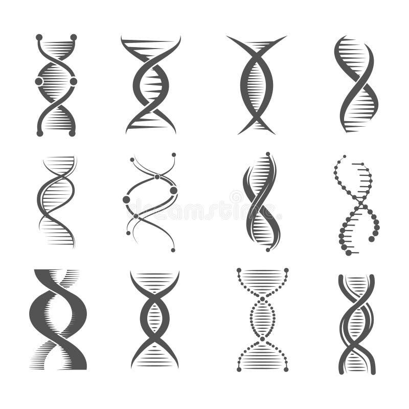 Dna spirali ikony Helix technologii badania chromosomu i molekuły ludzcy wektorowi symbole medyczni i farmaceutyczni ilustracja wektor