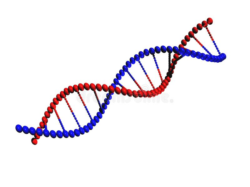 DNA Strand. With red and blue on white background royalty free illustration