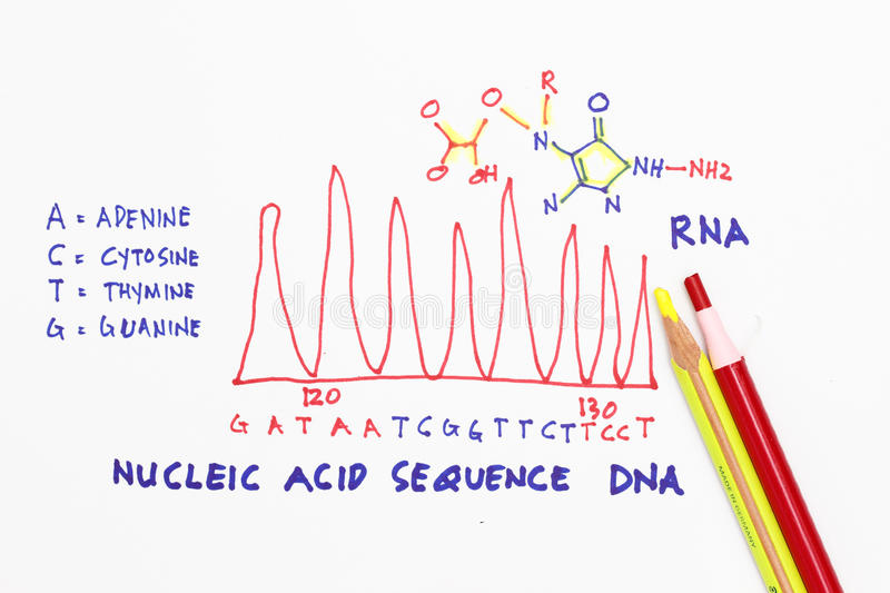 DNA strand. With sketch and diagram abstract royalty free stock images