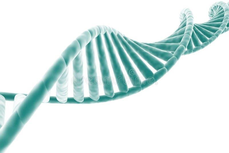 DNA strand royalty free illustration