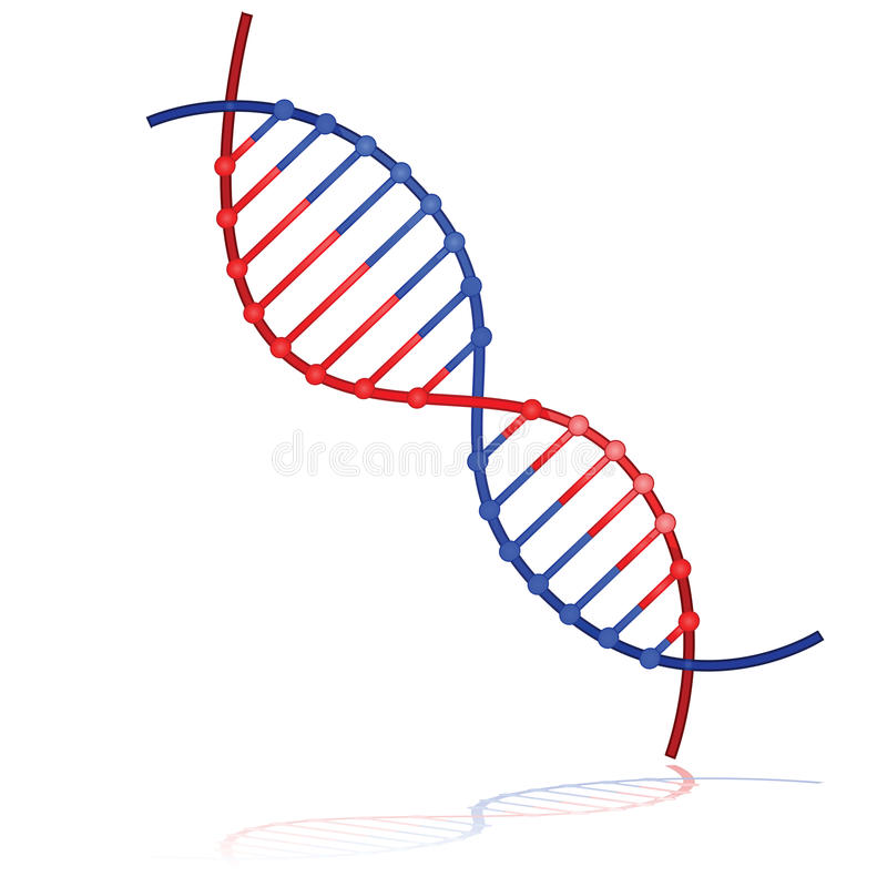 Download DNA Strand Stock Images - Image: 19543634