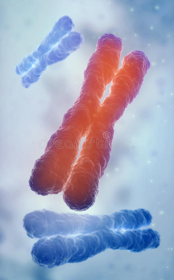DNA strand model royalty free stock images