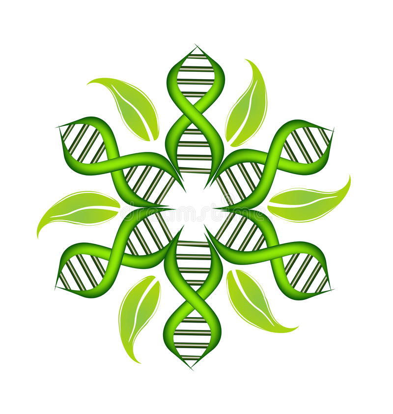 DNA Strands with leafs logo vector illustration