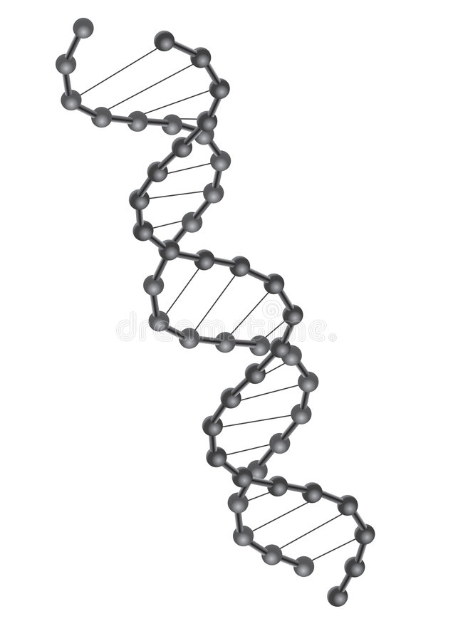 DNA vector. Crossed double Helix DNA strand in white background, vector stock illustration