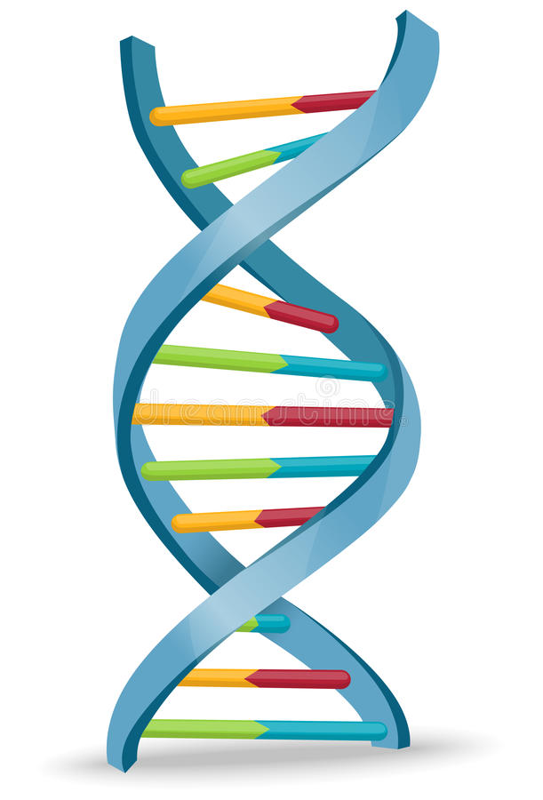 DNA. Vector illustration of human DNA structure