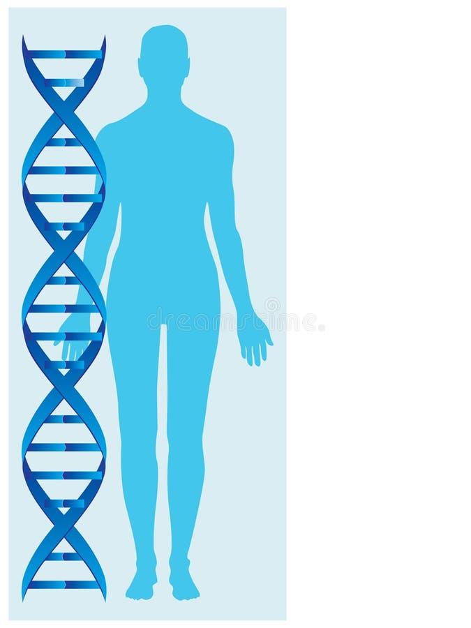 DNA y cuerpo humano stock de ilustración
