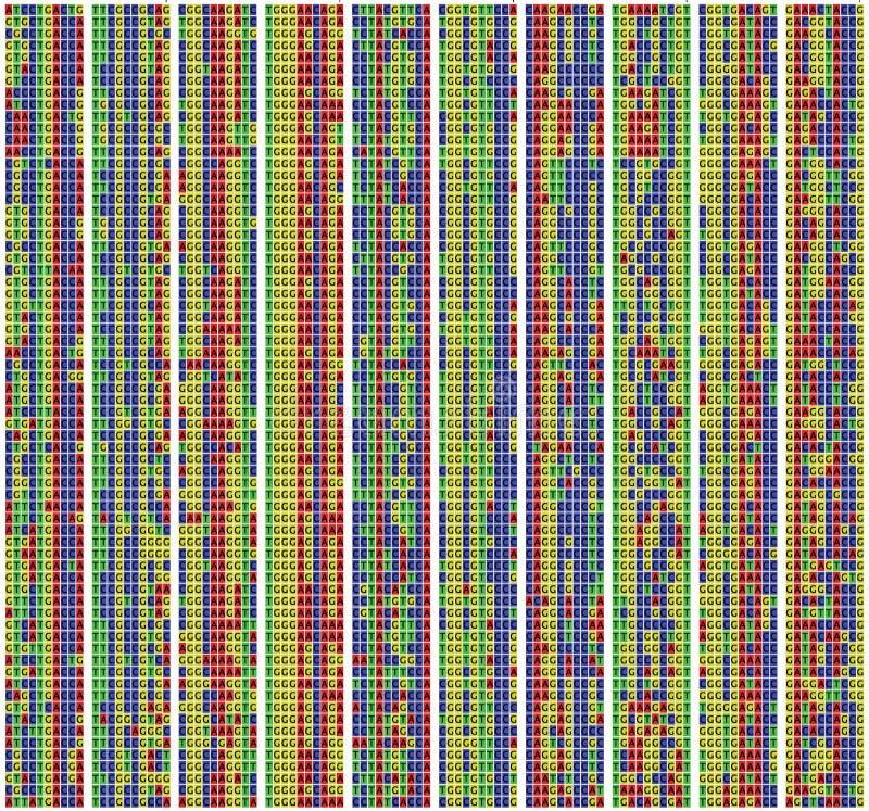 DNAföljdjustering royaltyfri illustrationer