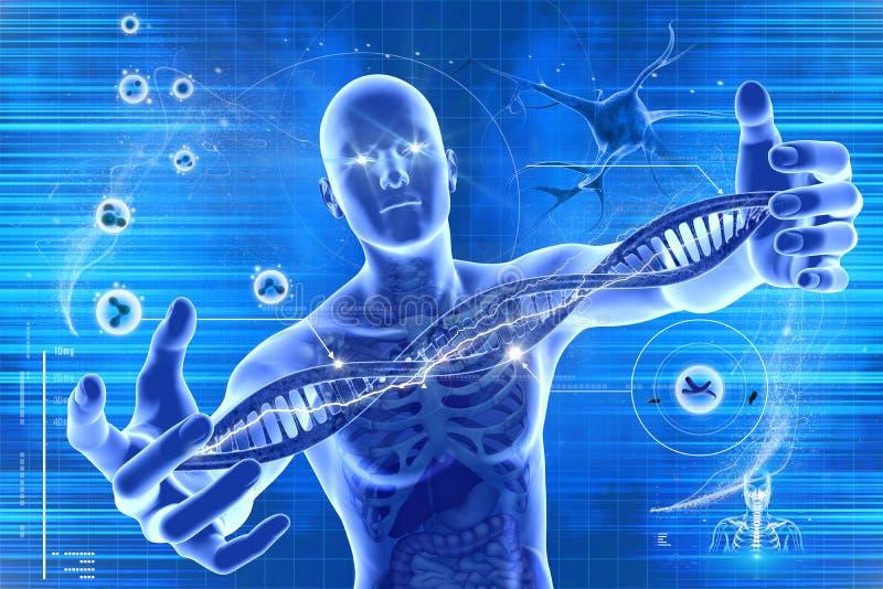 DNAmolekylar och män stock illustrationer