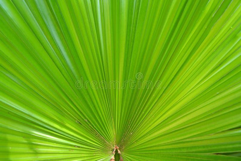 dni liści palm sunny zabrać zdjęcie royalty free