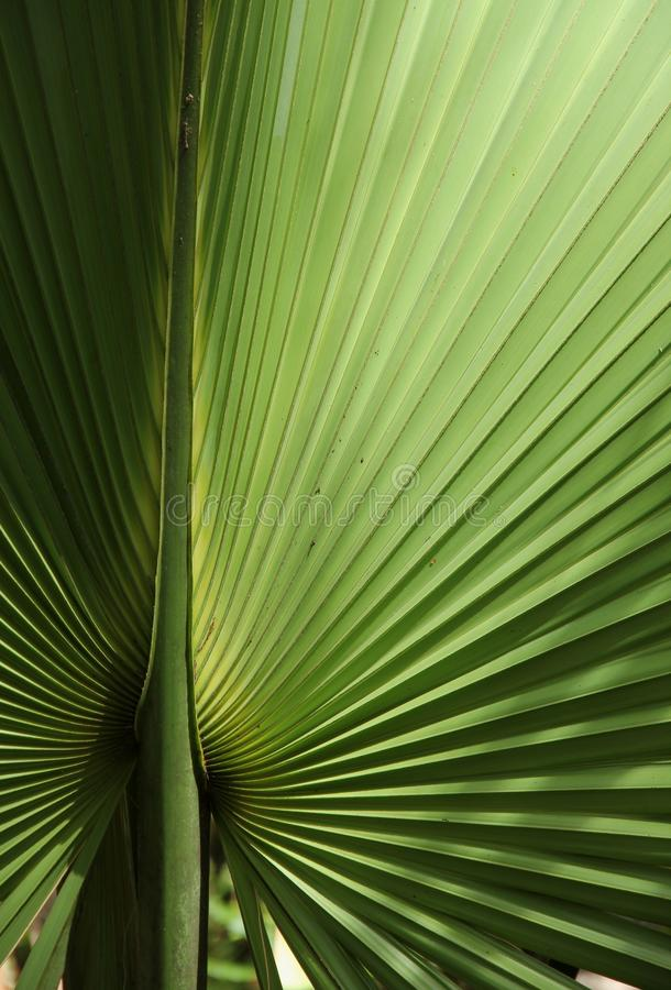 dni liści palm sunny zabrać obrazy stock