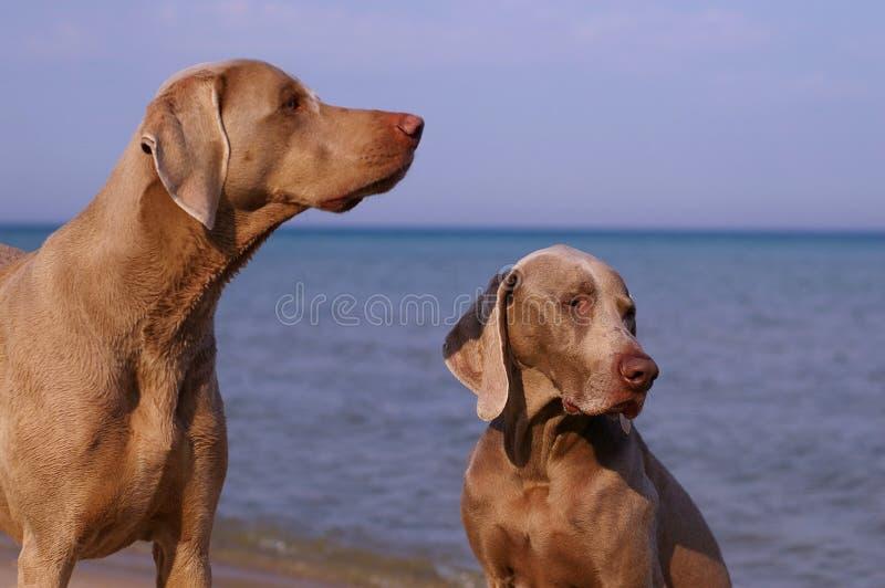 dni plażowy pies zdjęcia royalty free