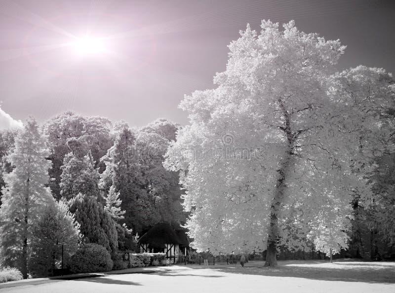 dni słonecznej park obrazy royalty free