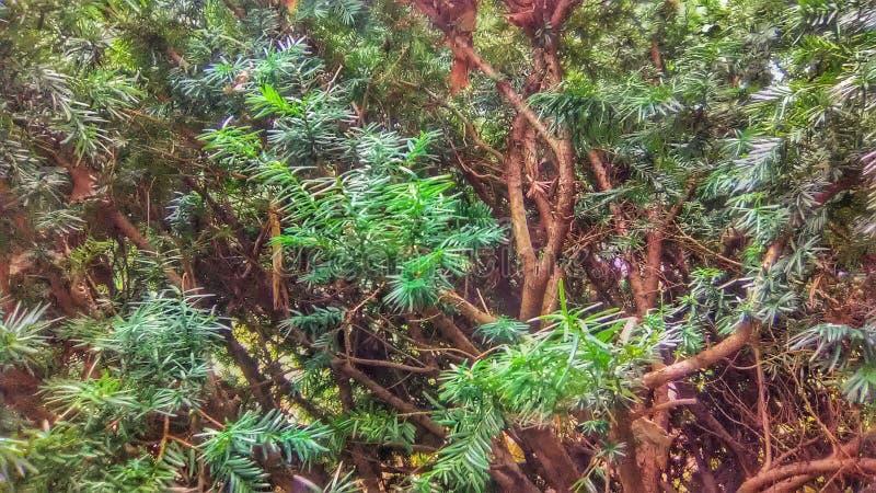 Dnia lekki shinning na zielonym krzaku obrazy stock