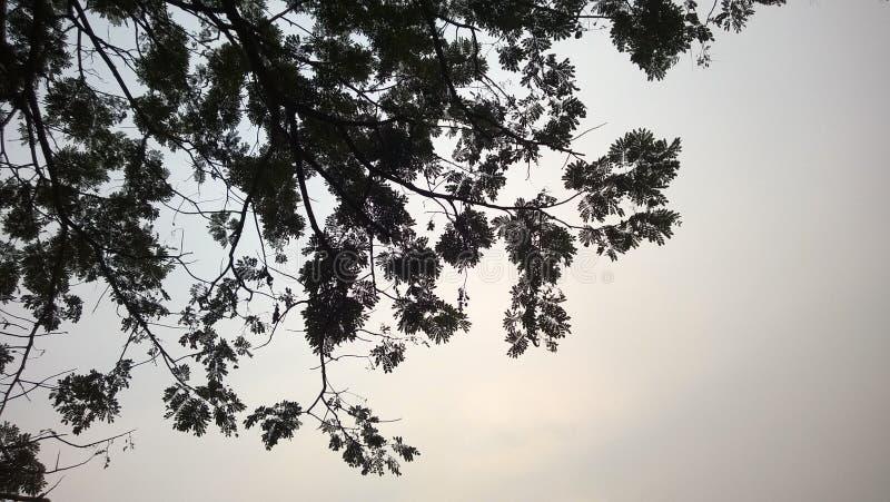 Dnia niebo zdjęcie royalty free