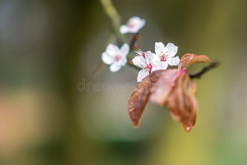 Dnia widoku zakończenie w górę nowych kwiatów na gałąź zdjęcia stock