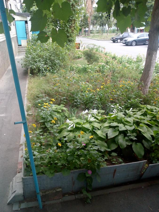 Dnipro savkina_street court flowers plants royalty free stock images