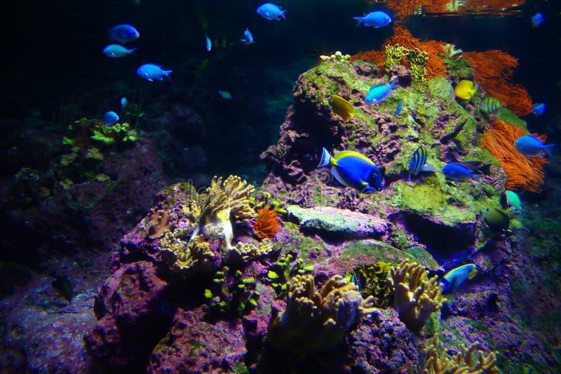 Dno morskie Tropikalny zdjęcie stock