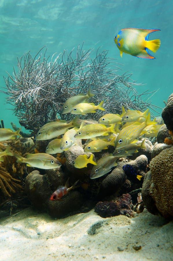 Download Dno Morskie Z Tłumem Ryba W Rafie Koralowa Obraz Stock - Obraz złożonej z życie, eksploracja: 28963891