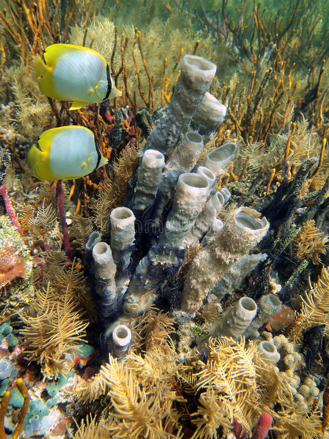 Download Dno Morskie Z Tubki Gąbką I Motyl Ryba Zdjęcie Stock - Obraz złożonej z ryba, sceneria: 28963884
