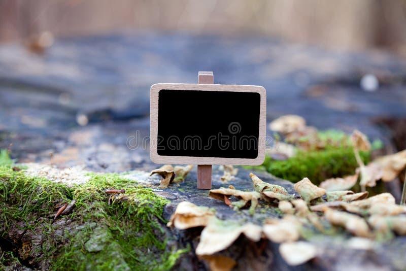 dołączający blackboard gałąź las drzewo zdjęcie stock