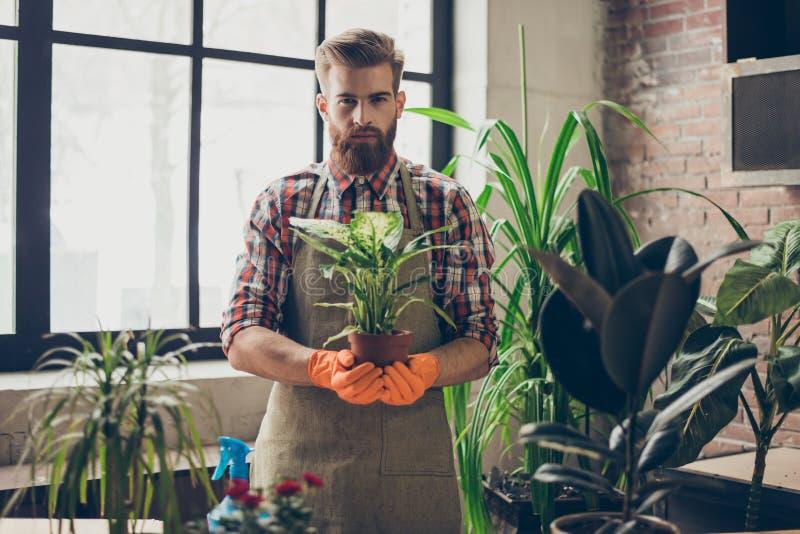 Doświadczona ogrodniczka jest ubranym fartucha i rękawiczki pokazuje jego rośliny używa ochronnej odzieży rękawiczek fartucha mie obraz stock