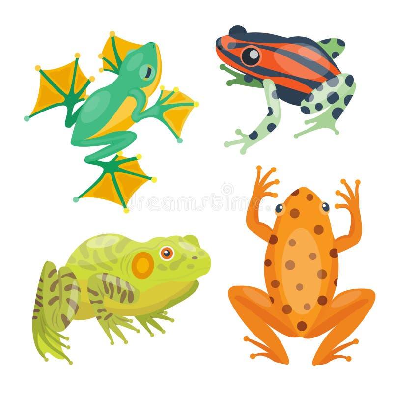 Do ícone animal tropical da natureza dos desenhos animados dos desenhos animados da rã anfíbio engraçado selvagem engraçado e iso ilustração stock