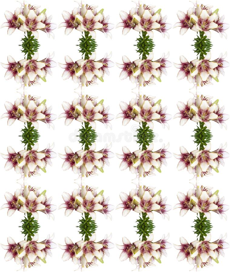 Do buquet fresco da flor da flor do lírio teste padrão sem emenda isolado no fundo branco imagens de stock