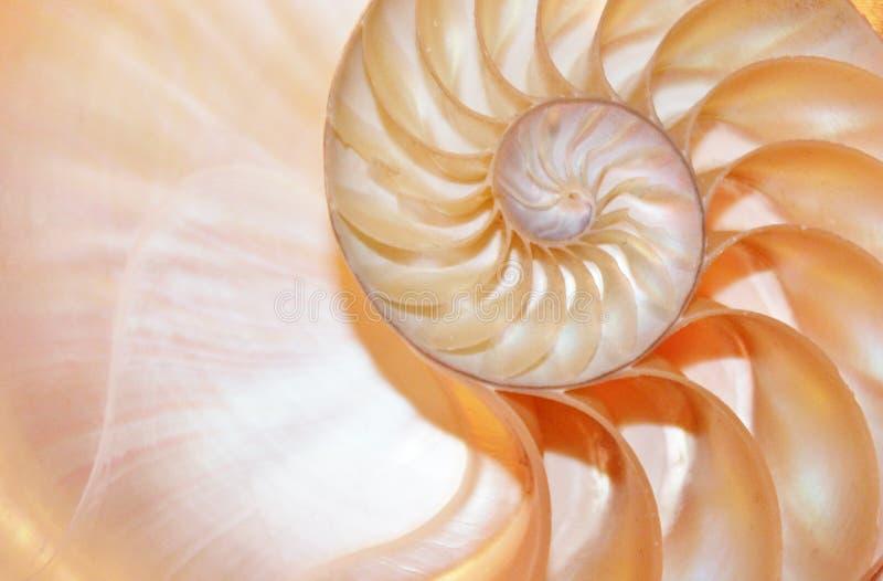 Do crescimento espiral de seção transversal da estrutura da simetria de Fibonacci do shell do nautilus relação dourada imagens de stock royalty free