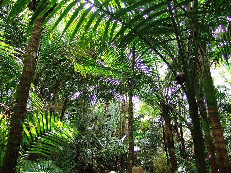 do dżungli. zdjęcie stock