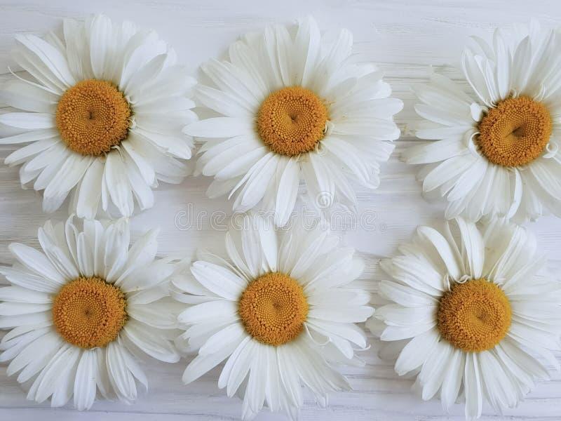 Do fundo de madeira rústico branco da planta da composição da camomila verão festivo fotografia de stock