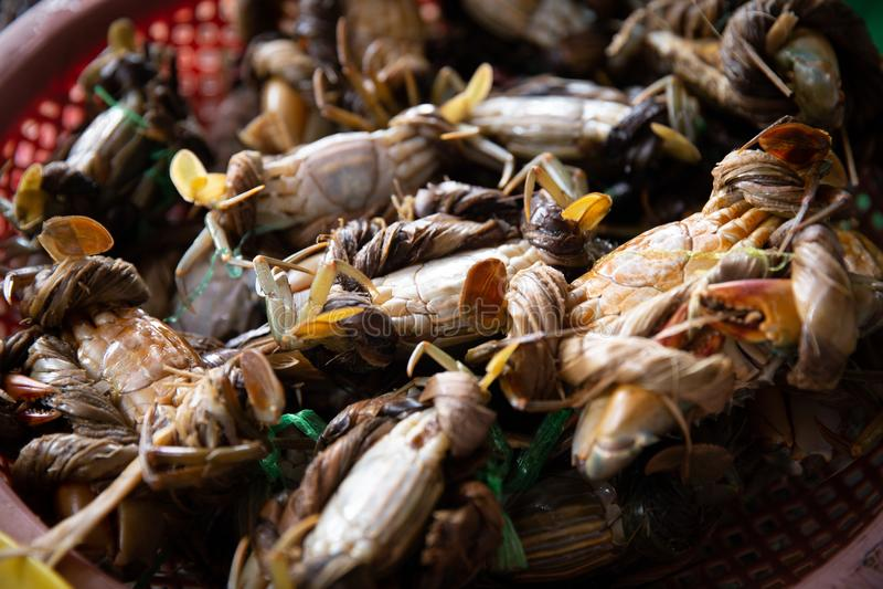 Do góry nogami Wiążący up kraby zdjęcie royalty free