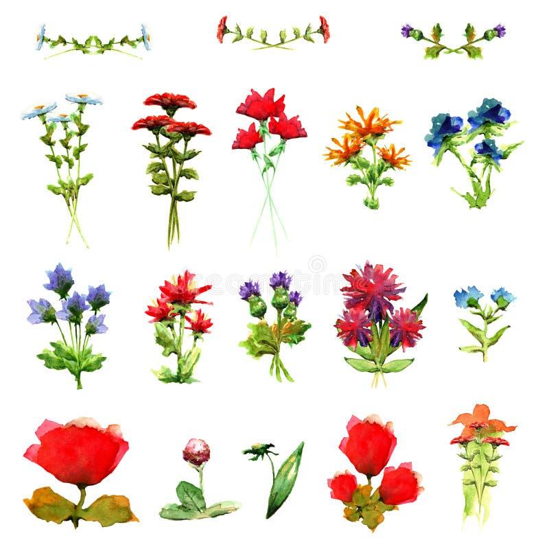 Do jardim brilhante colorido bonito do verão dos ramalhetes das flores selvagens a aquarela floral da fragrância pinta a decoraçã ilustração do vetor
