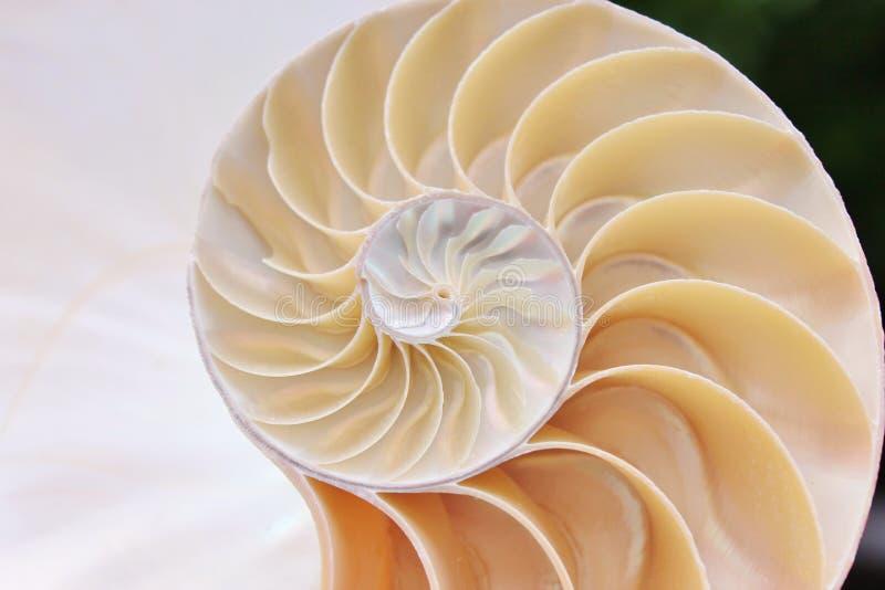 Do nautilus do shell da simetria de Fibonacci da relação da estrutura do crescimento do fim fim iluminado da madrepérola acima pa fotografia de stock