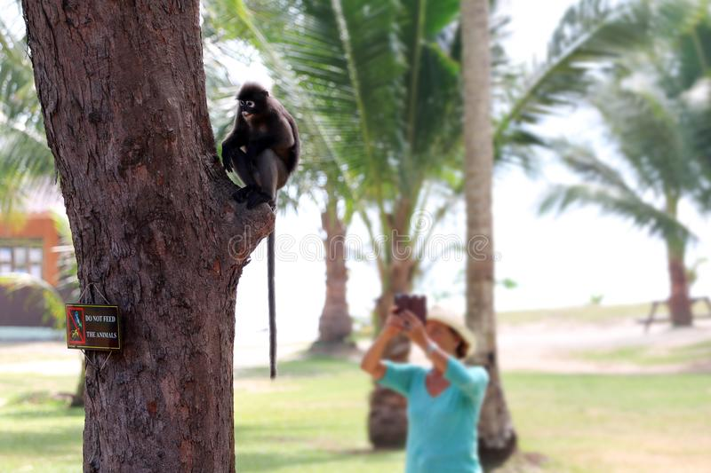 Do not feed the animals sign on the tree with wild monkey and to. Urist ,Dusky langur stock image