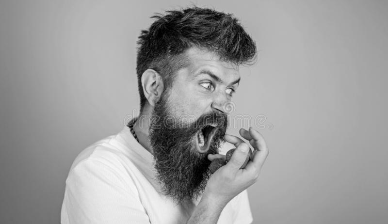 Do not touch my berry. Hipster bearded holds strawberries on palm. Man greedy hungry not going to share strawberries royalty free stock photo