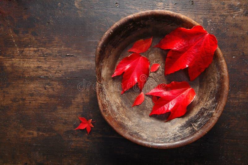 Do outono da folha vida ainda fotos de stock