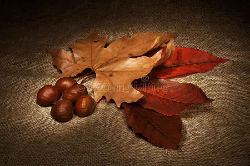 Do outono vida ainda imagens de stock