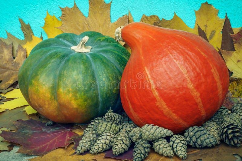 Do outono vida ainda dois abóboras e cones no fundo das folhas de bordo coloridos secas perto do muro de cimento emplastrado imagem de stock
