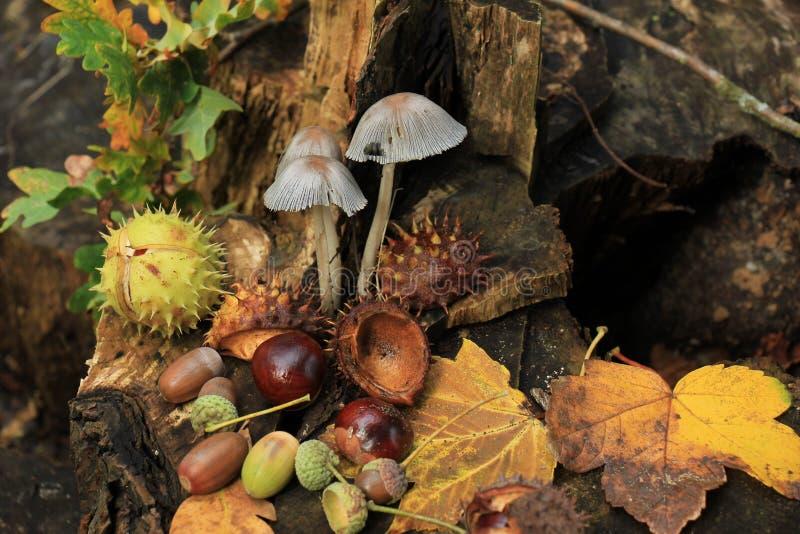 Do outono vida ainda fotografia de stock