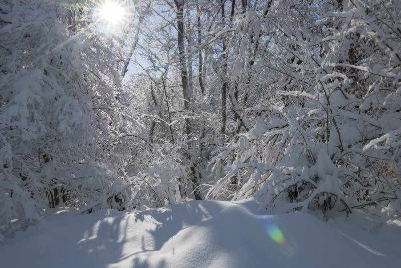 do sunny zimy zdjęcie stock