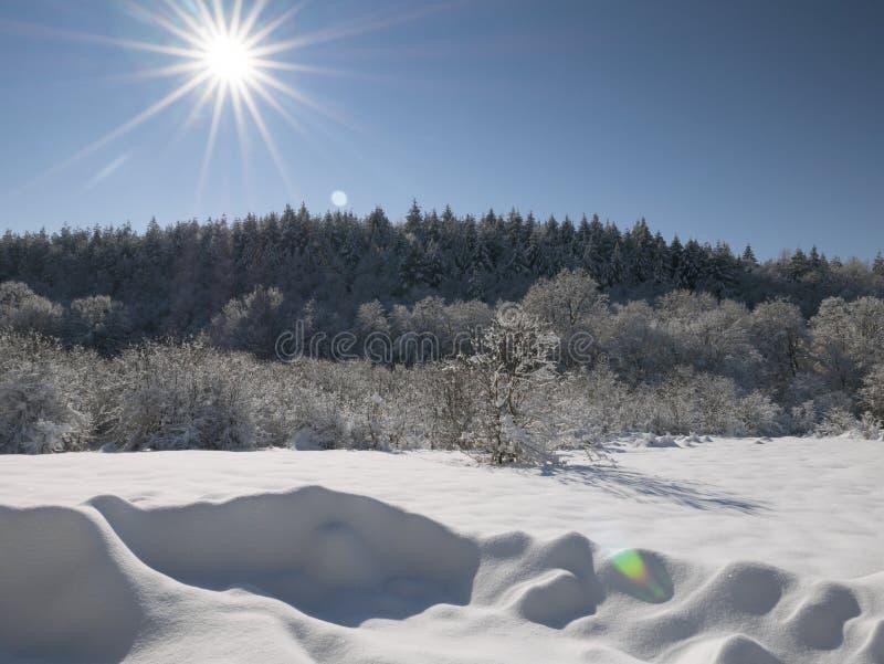 do sunny zimy zdjęcia royalty free