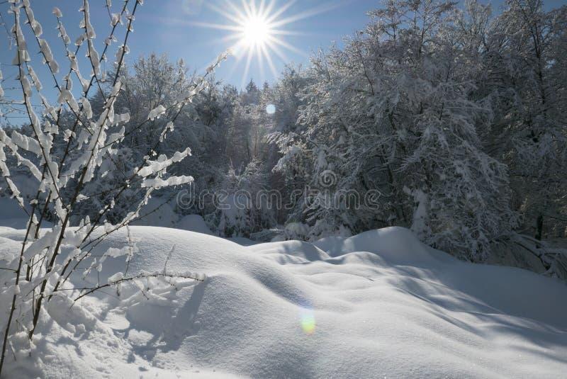 do sunny zimy obrazy stock