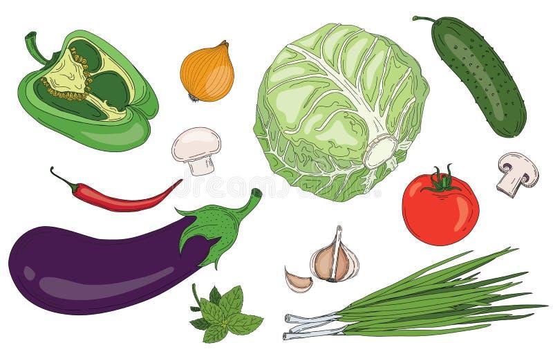 Do verde fresco da mola dos vegetais e das ervas coleção orgânica do vetor ilustração stock